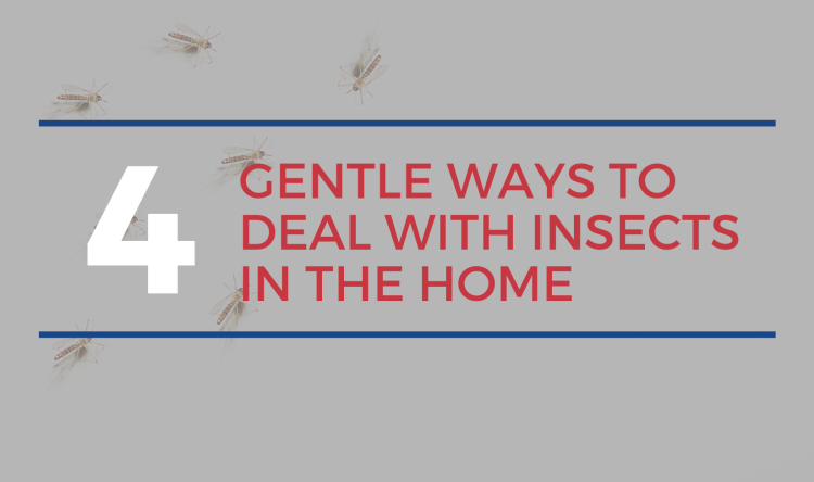 Guelph Real Estate Agents - Gentle Ways to Deal with Insects